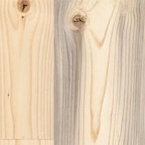 North Fork Pine
