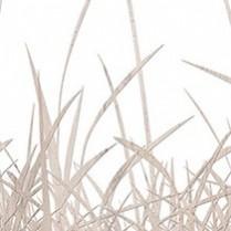 Beech Grasses