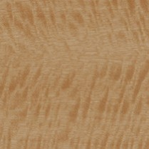 Golden Satinwood